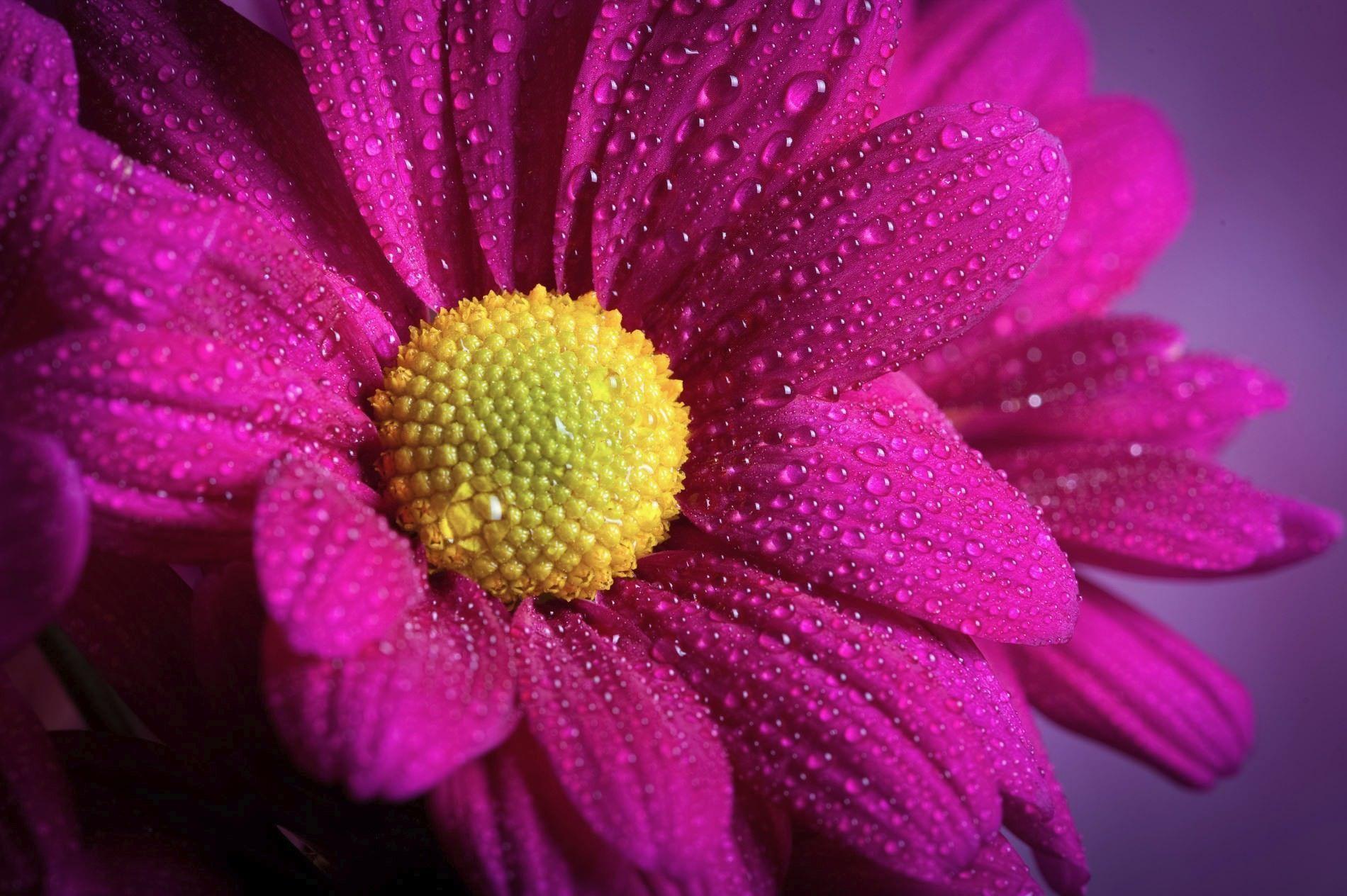 fotografía floral tomada en el curso de fotografía avanzado de fin de semana