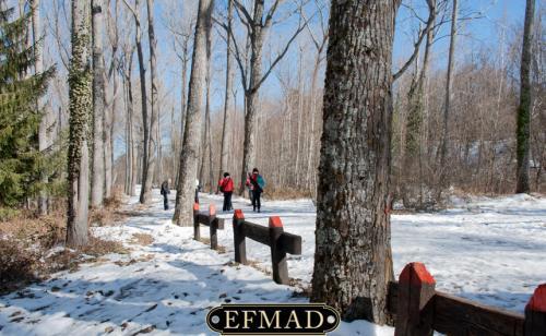 2015-01-25 quedada-rascafria-nieve 026