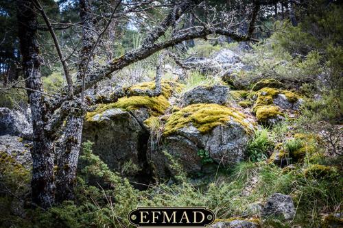 canencia ruta fotografica efmad-13