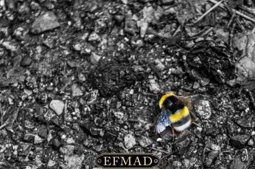 canencia ruta fotografica efmad-23