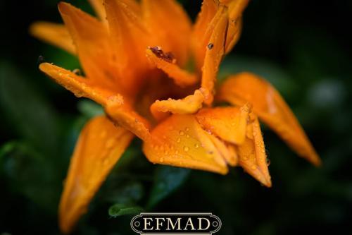 curso de fotografia macro-19