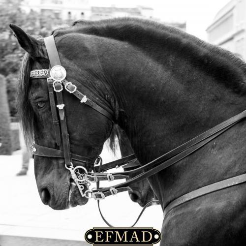 quedada EFMAD-015