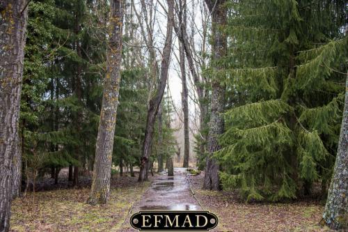 Ruta bosque finlandés Rascafría