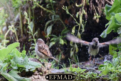 salidas fotograficas madrid retiro EFMAD-21