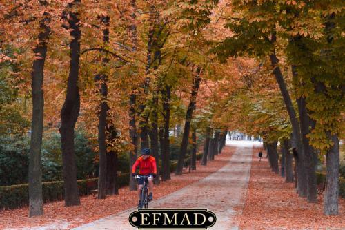 salidas fotograficas madrid retiro EFMAD-5