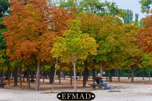 salidas fotograficas madrid retiro EFMAD-9